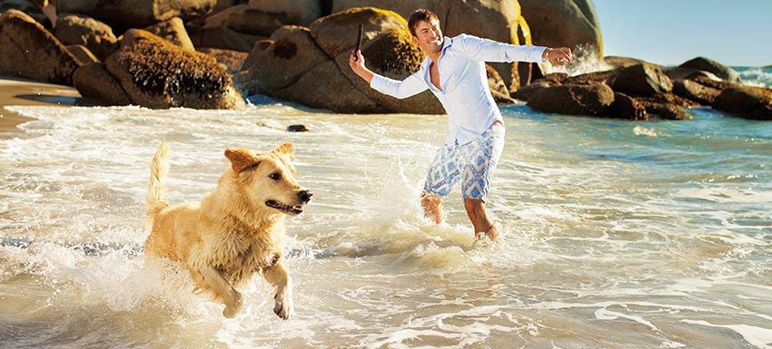 playas perros espana 2017